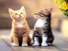 Münir Derman Anlatıyor: Kedi